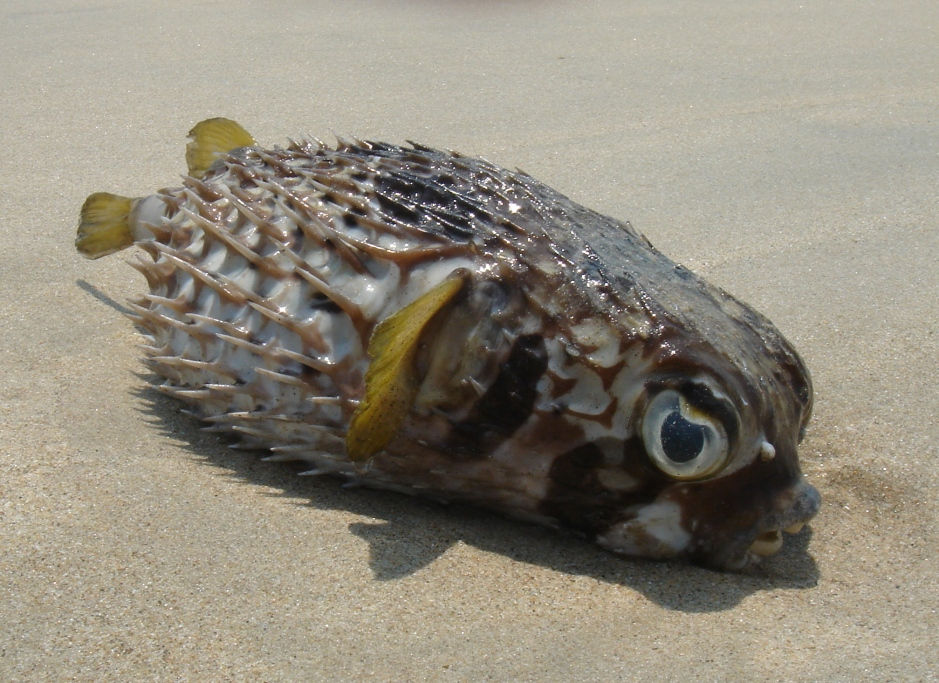 Funny looking fish